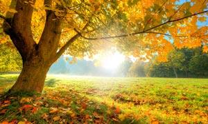 秋季树林日出美景摄影图片