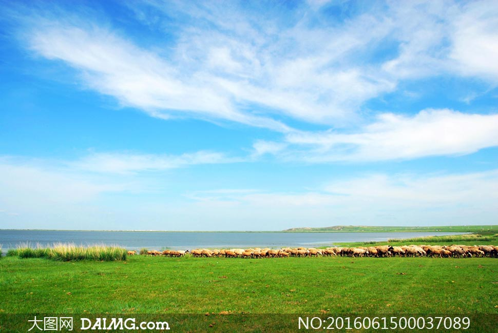 呼伦贝尔草原美丽风光摄影图片