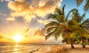 海邊椰樹夕陽美景攝影圖片