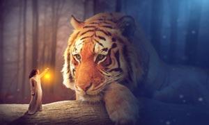 创意的森林仙子和老虎PS教程素材