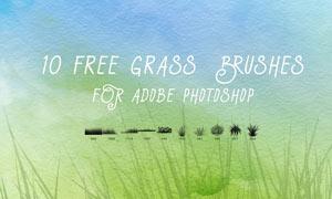 10款手绘绿色小草和草丛笔刷