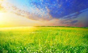 蓝天下的绿色草丛和野花摄影图片
