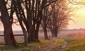 小路与树叶凋零的大树摄影高清图片