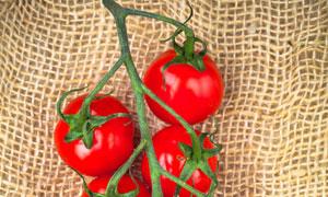麻袋片上的西红柿特写摄影高清图片