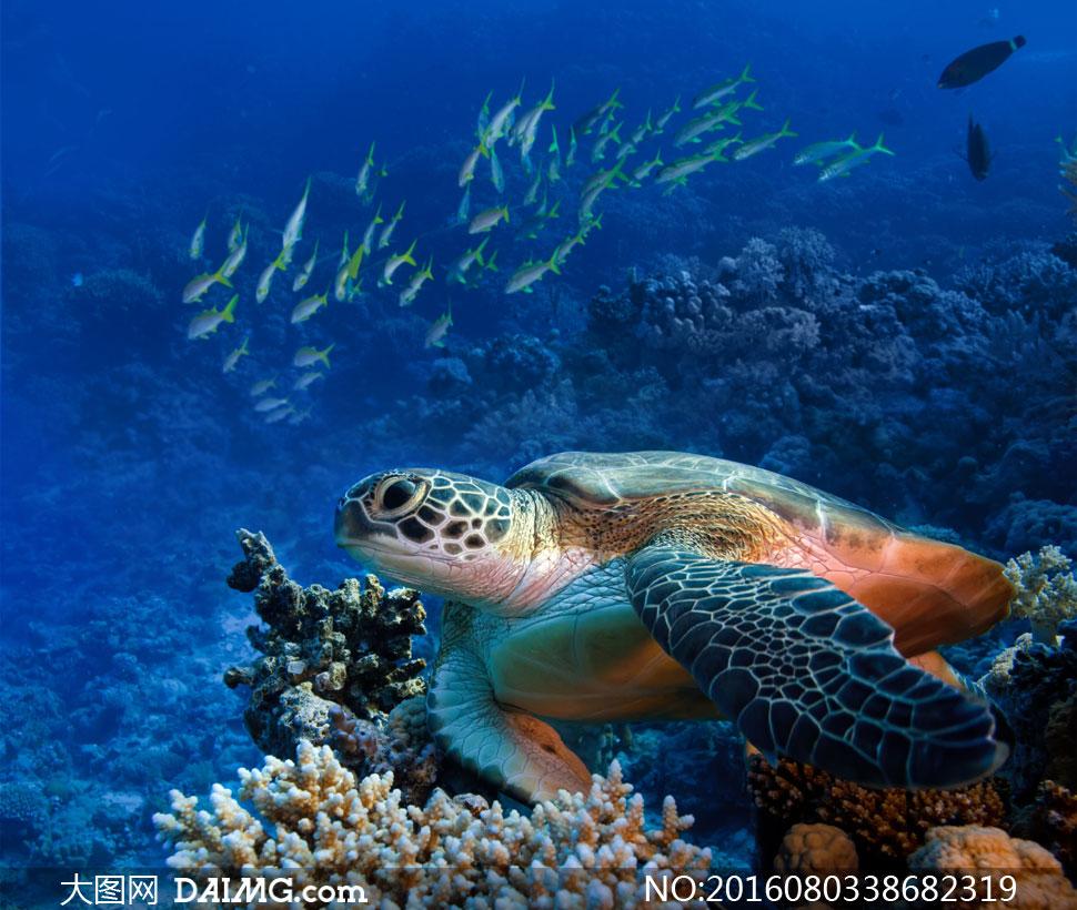 大图首页 高清图片 动物百态 > 素材信息          潜水员与在游着的