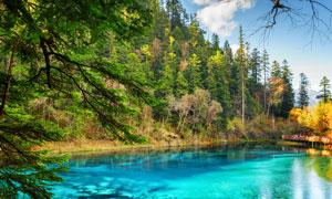 湖景与在山坡上的树木植被高清图片