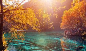 秋天树木与水里的枯木摄影高清图片