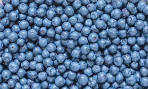 精心遴选出的优质蓝莓摄影高清图片