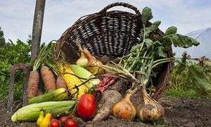 胡萝卜与带着泥土的洋葱等高清图片