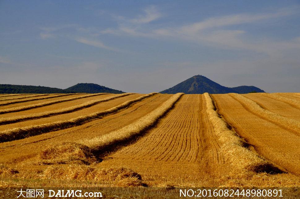 关 键 词: 高清摄影图片大图自然风景风光蓝天天空白云云彩云层麦田