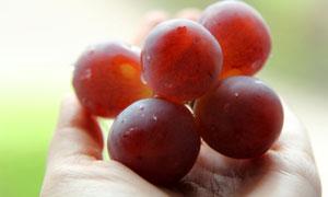 拿在手里的红葡萄特写摄影高清图片