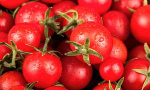 有水珠的新鲜番茄特写摄影高清图片