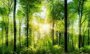 清晨树林美丽风景摄影图片