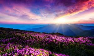 清晨阳光下的美丽花园摄影图片
