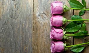 精心挑选的几朵郁金香花朵高清图片