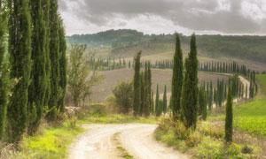 路两边的松树田园风光摄影高清图片