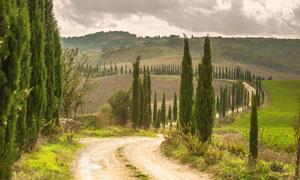 在路边的农田自然风光摄影高清图片