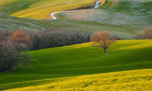 蜿蜒小路与树木等田园风光高清图片
