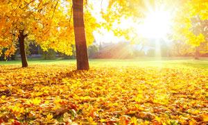 秋季奥林匹克公园美丽日出摄影图片