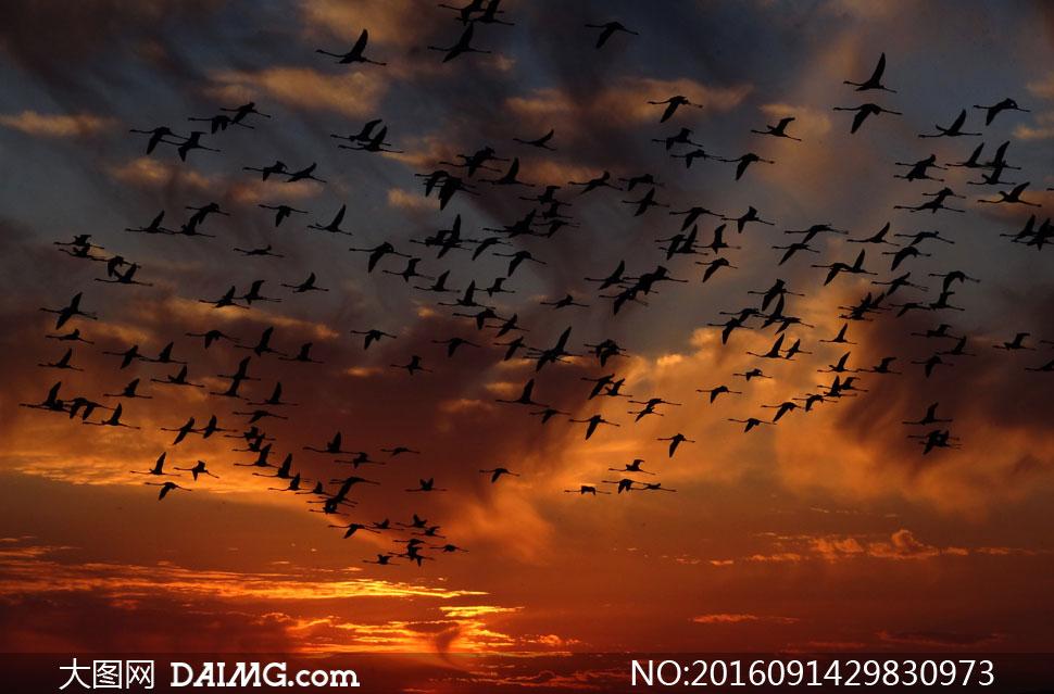 黄昏云霞与空中的飞鸟摄影高清图片