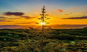 夕阳下的美丽山峦和树木摄影图片
