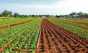田园蔬菜种植园摄影图片