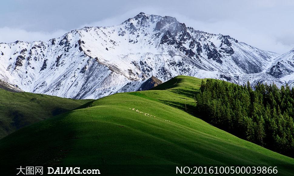 树林树木草地山坡草坪牧羊天空自然景观山水风景摄影高清大图图片素材