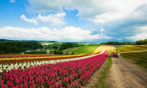 蓝天下的农田和花园美景摄影图片