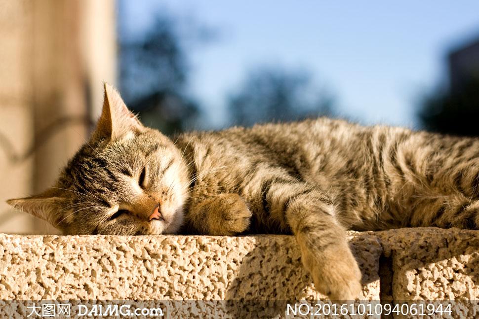关 键 词: 高清摄影图片大图素材动物猫咪小猫可爱萌宠宠物犯懒慵懒