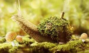 蜗牛上的创意房屋效果图PS教程素材