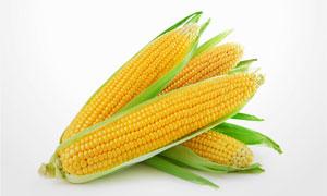 新鲜的甜玉米近景微距摄影高清图片