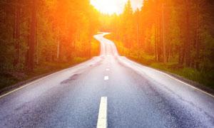 在道路两边的树木逆光摄影优博娱乐官网