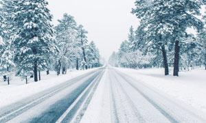 道路与落满积雪的树木摄影高清图片