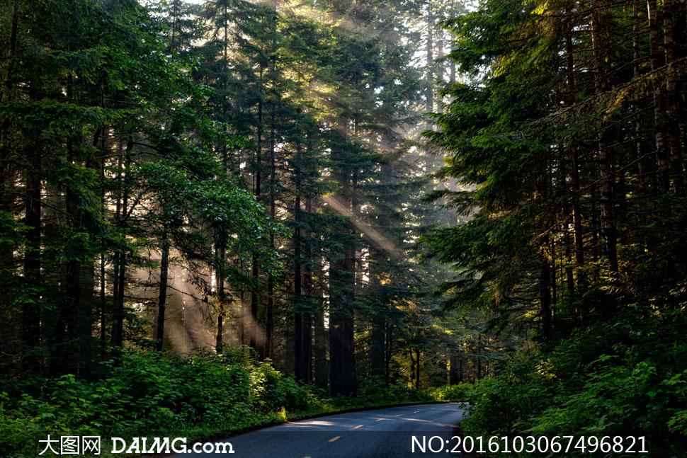 公路转弯处的树林风光摄影高清图片 - 大图网设计素材