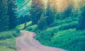 耀眼阳光与在山脚下的小路高清图片