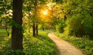 春夏时分的树木与小路摄影高清图片