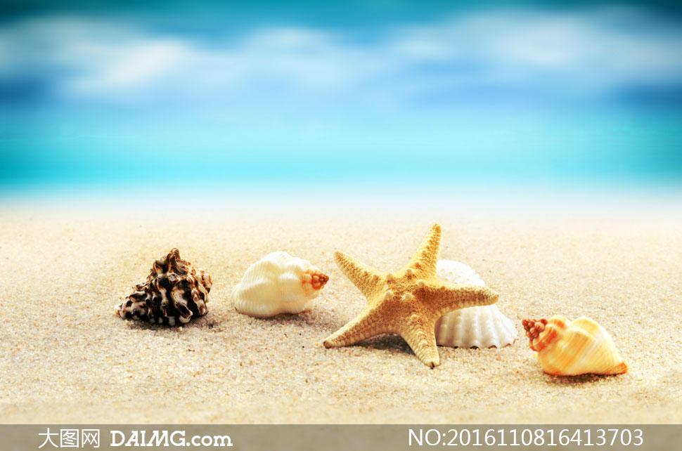 沙滩上的海螺贝壳海星摄影高清图片