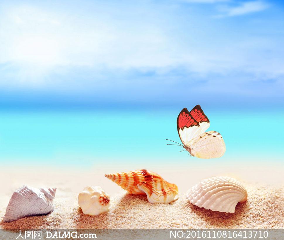关 键 词: 高清图片大图素材摄影近景微距特写沙滩海滩海螺贝壳蓝天