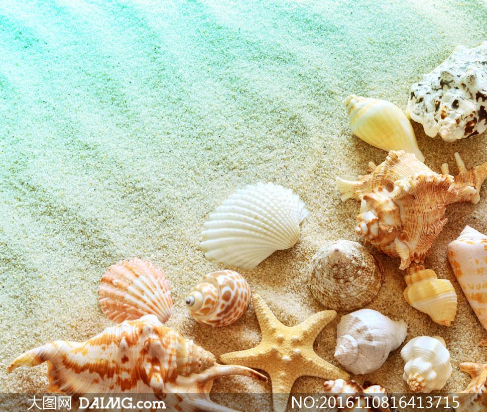 沙滩上的贝壳近景特写摄影高清图片