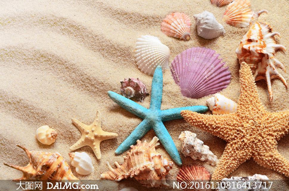 沙滩上的海星与几种贝壳等高清图片