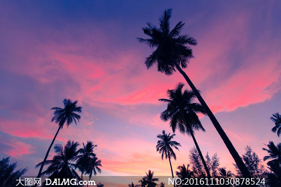 黄昏天空中的云彩与椰树等高清图片