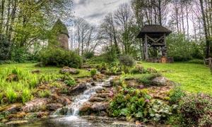 树林中美丽的小溪摄影图片