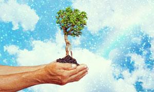 捧在双手上的树木泥土创意高清图片