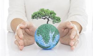 生长出树木的地球创意设计高清图片