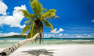 蓝天白云与在沙滩上的椰树摄影图片