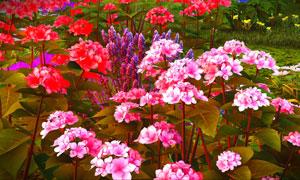 惟妙惟肖效果花卉植物设计高清图片