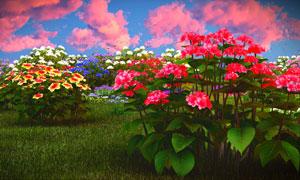 在草地上鲜艳花卉植物特写高清图片