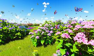 蓝天与招蜂引蝶的花卉植物高清图片