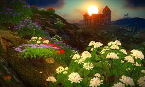 黄昏夕阳余晖下的花卉植物高清图片