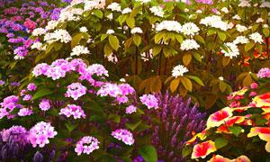 鲜花盛着开的花园一角特写高清图片